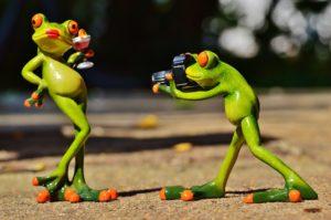 frog-881654_1920